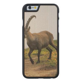 Male wild alpine, capra ibex, or steinbock carved maple iPhone 6 case
