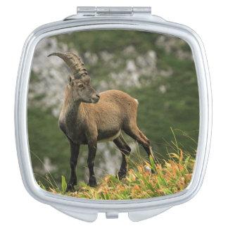 Male wild alpine, capra ibex, or steinbock compact mirrors