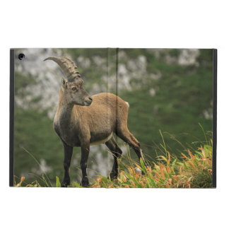 Male wild alpine, capra ibex, or steinbock cover for iPad air