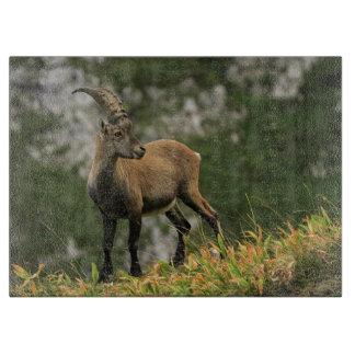 Male wild alpine, capra ibex, or steinbock cutting board