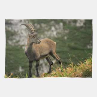 Male wild alpine, capra ibex, or steinbock hand towels