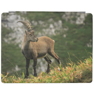 Male wild alpine, capra ibex, or steinbock iPad cover