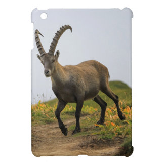 Male wild alpine, capra ibex, or steinbock iPad mini cases