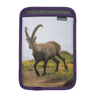 Male wild alpine, capra ibex, or steinbock iPad mini sleeve