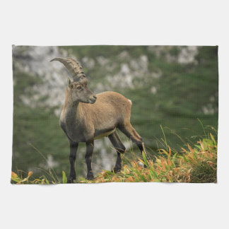 Male wild alpine, capra ibex, or steinbock kitchen towels