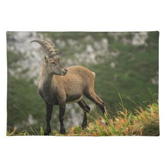 Male wild alpine, capra ibex, or steinbock placemat