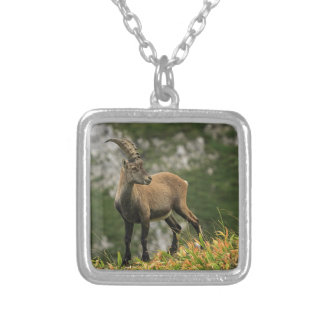 Male wild alpine, capra ibex, or steinbock silver plated necklace