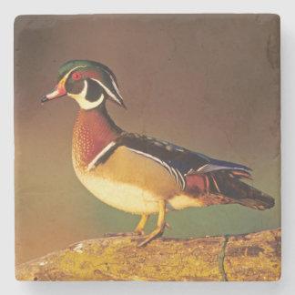 Male wood duck, Illinois Stone Coaster