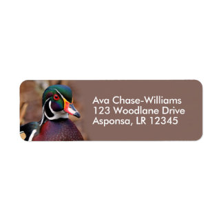 Male Wood Duck in the Woods