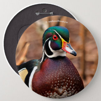 Male Wood Duck in the Woods 6 Inch Round Button