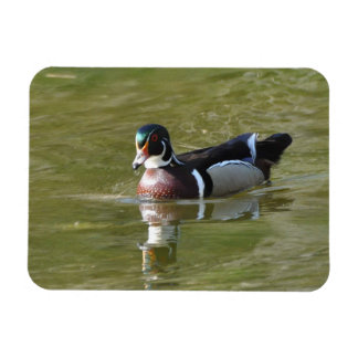 Male Wood Duck Rectangular Photo Magnet