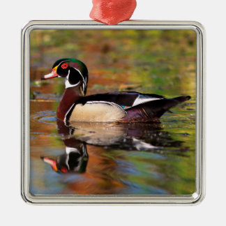 Male wood duck swims, California Silver-Colored Square Ornament