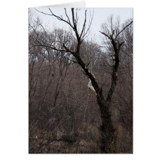 Malificent Tree Card