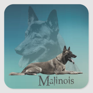 Malinois - Belgian shepherd -Mechelaar -Maligator Square Sticker