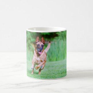 Malinois dog running coffee mug