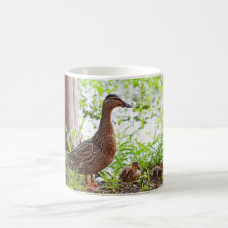 Mallard and Ducklings by Shirley Taylor Coffee Mug