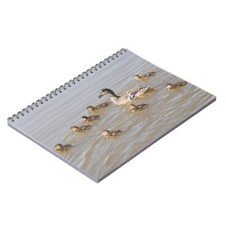 Mallard and Ducklings Note Books