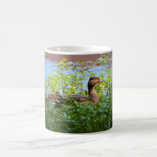 Mallard and Ducklings-Swimming by Shirley Taylor Coffee Mug