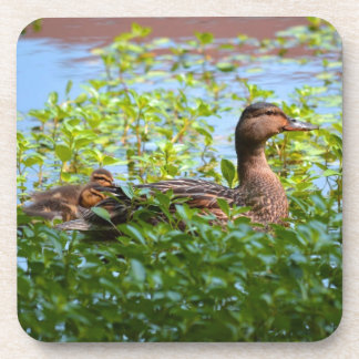 Mallard and Ducklings-Swimming by Shirley Taylor Drink Coaster