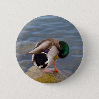 Mallard colors 2 inch round button