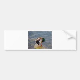 Mallard colors bumper sticker