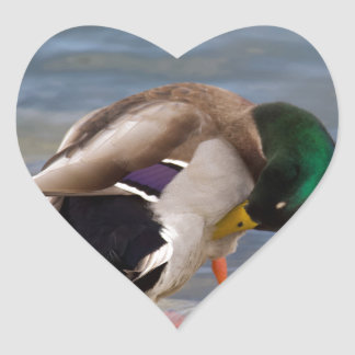 Mallard colors heart sticker