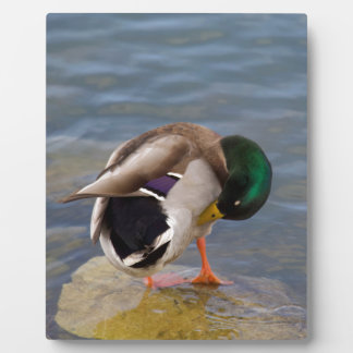Mallard colors plaque