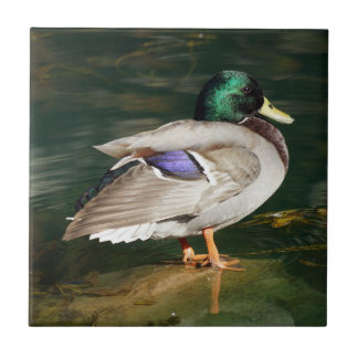 Mallard Duck Ceramic Photo Tile
