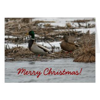 Mallard Duck Christmas Card