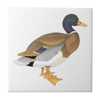 Mallard Duck (Drake) Tile