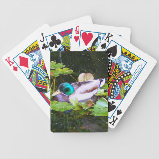 Mallard duck in a pond bicycle playing cards