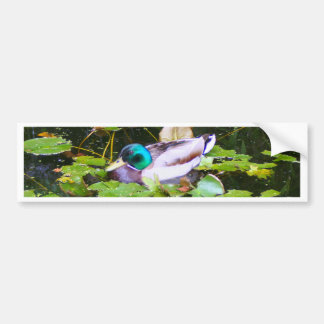 Mallard duck in a pond bumper sticker