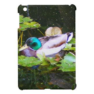 Mallard duck in a pond cover for the iPad mini