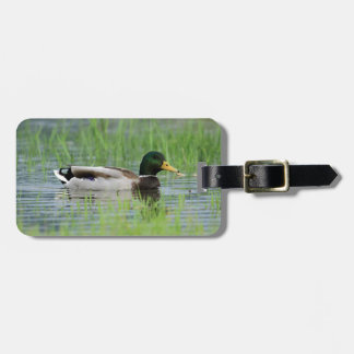 Mallard duck in a pond luggage tag