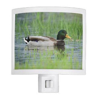 Mallard duck in a pond nite lite