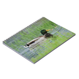 Mallard duck in a pond notebook