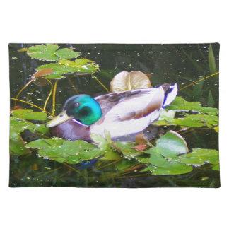 Mallard duck in a pond placemat