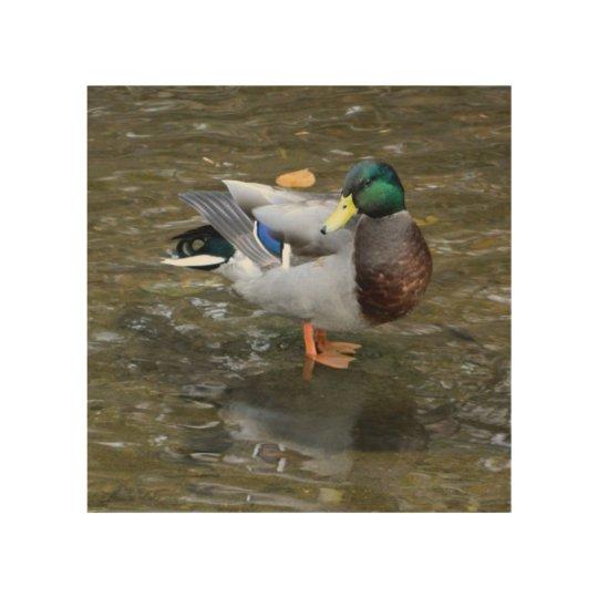 Mallard Duck in Creek Wood Wall Art