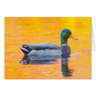 Mallard duck on orange lake, Canada Card