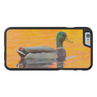 Mallard duck on orange lake, Canada Carved® Maple iPhone 6 Case