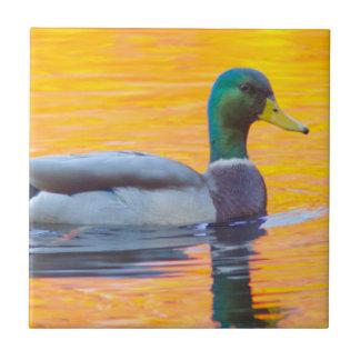 Mallard duck on orange lake, Canada Ceramic Tiles