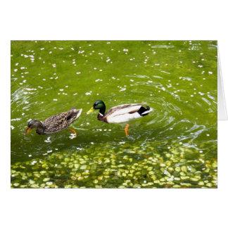 Mallard Duck Pair Card