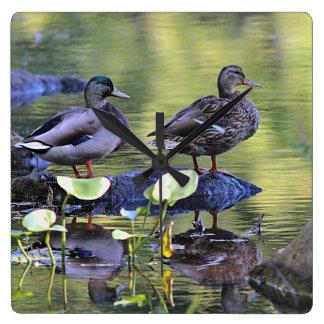 Mallard duck pair square wall clock