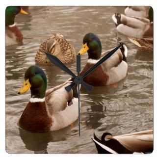 Mallard Duck Photo Wall Clock