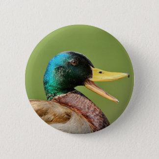 mallard duck portrait 2 inch round button