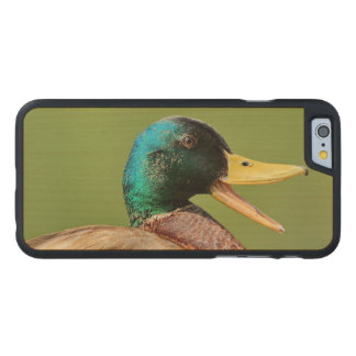 mallard duck portrait carved maple iPhone 6 case