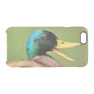 mallard duck portrait clear iPhone 6/6S case