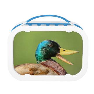 mallard duck portrait lunchbox