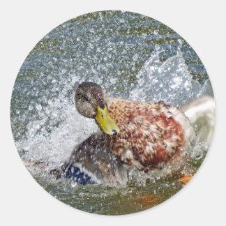 Mallard Duck Splish Splash Taking A Bath Classic Round Sticker