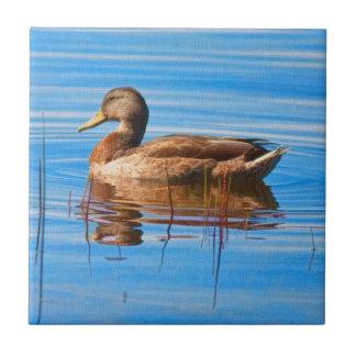 Mallard Duck Tile